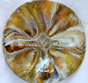 "Figure 4...Final bowl ""Tortoise Shell"""